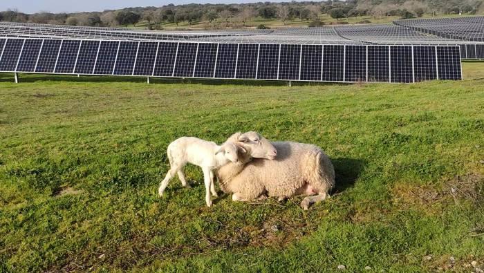 Arabako lurretan parke fotovoltaikoak jartzeko proiektu berriak martxan