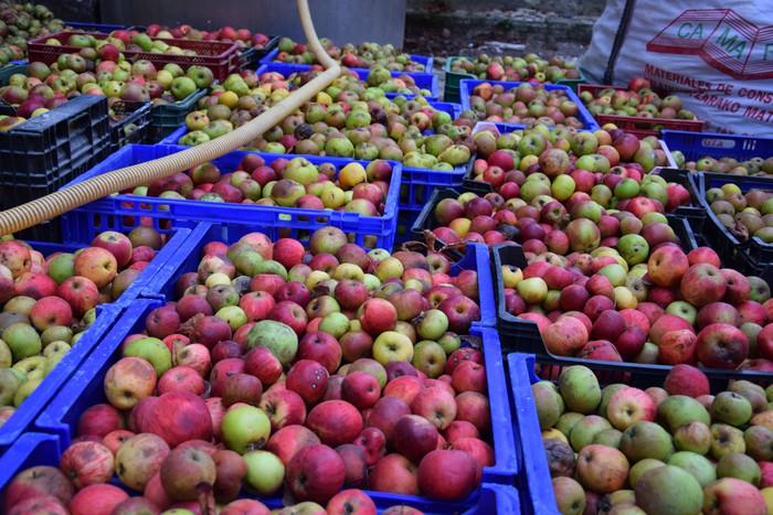 Fruta-arbolak landatzeko 30.000 euroko diru-laguntza emango du Aldundiak
