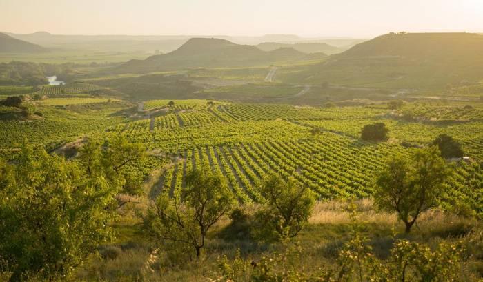 Arabako nekazaritzaren sektoreak sasoiko 500 langile behar ditu