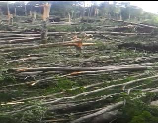 Tornadoak Entzian jotako lau hektarea gordeko dira aldaketa klimatikoa ikertzeko