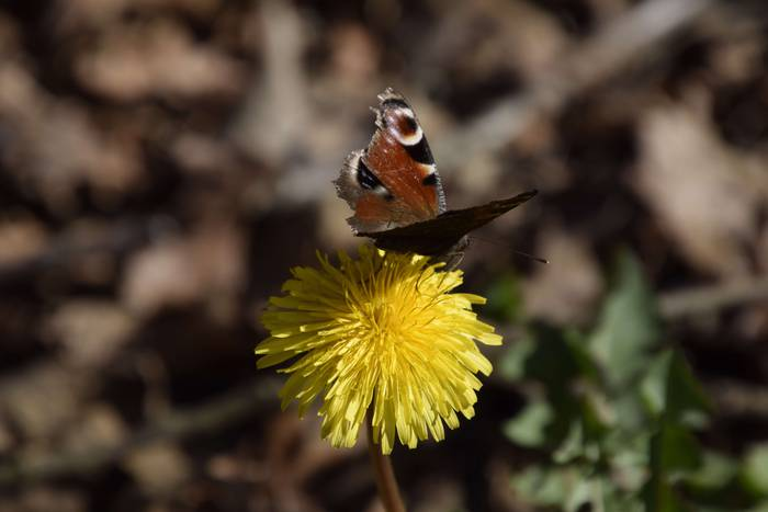 Botanikarekin lotutako jarduera ugari aurreikusi dituzte udaberrian Gasteizen