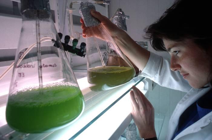 Biodiesela ekoitzi dute, algak erabilita